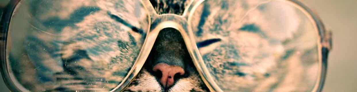 Acc. pour animaux